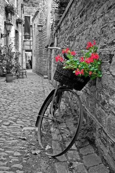 black and white photography with a touch of color / color splash / bicycle basket with flowers