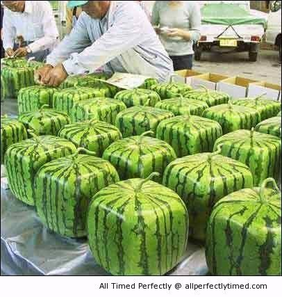 New Square Shape Watermelon – Melons that you can stack up without rolling away.