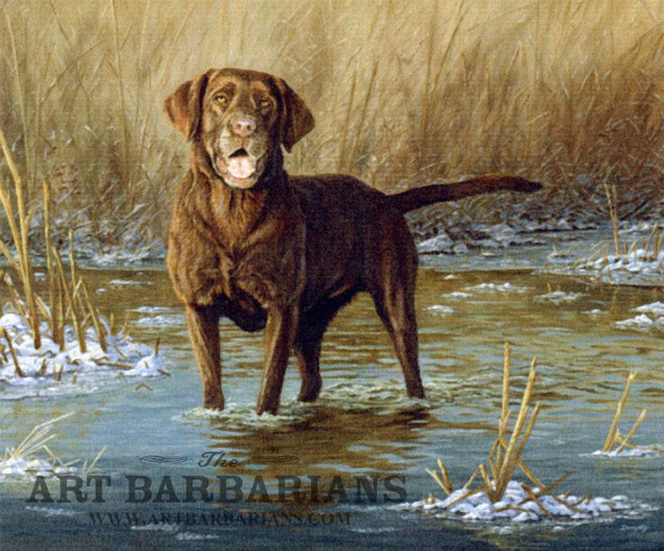 Hope In Minnesota >> Chocolate Lab Hunting Painting   www.pixshark.com - Images Galleries With A Bite!
