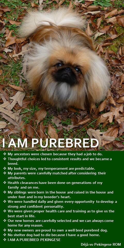 May 1st - Happy National Purebred Dog Day!