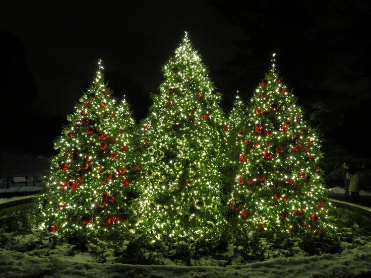 Ny Botanical Gardens Ny Botanical Garden My Photo 640 x 480