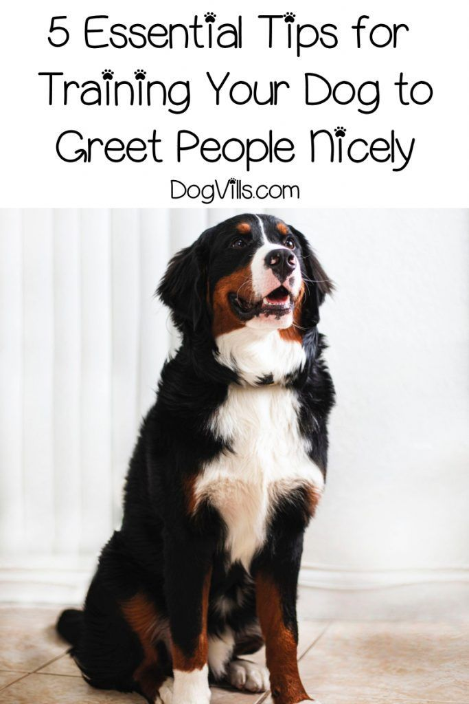 How To Train Your Dog To Greet Visitors In 5 Easy Steps Dog