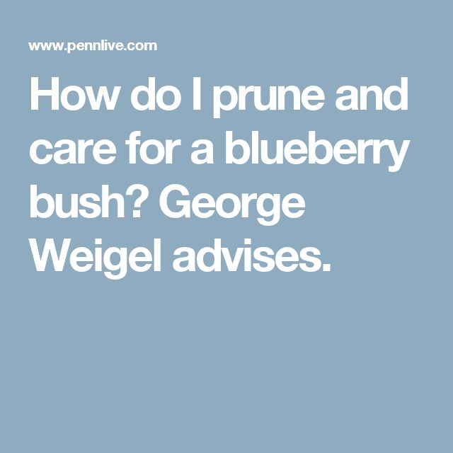 How do I prune and care for a blueberry bush? George Weigel advises.