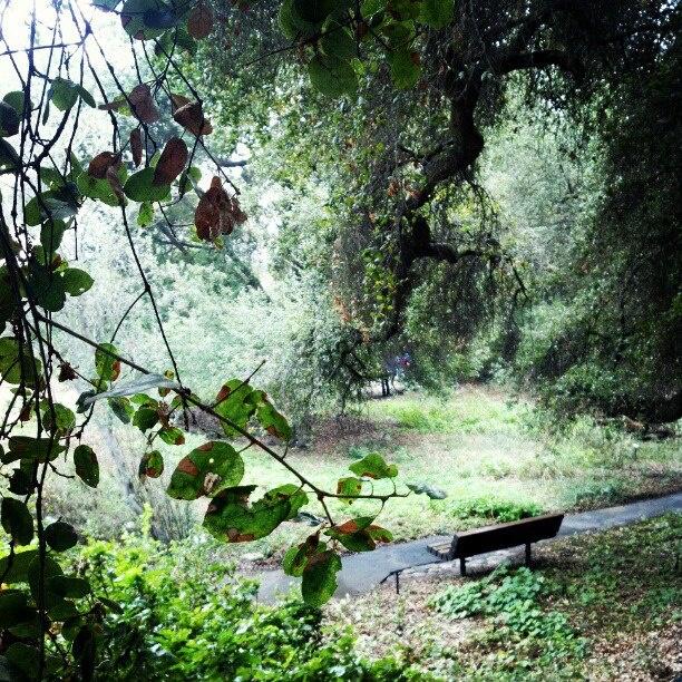 Merveilleux Rancho Santa Ana Botanic Garden Claremont, CA