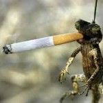 frog with a cigarette