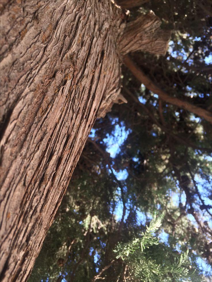 Alive tree