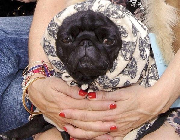 Anjing Lucu di Barisan Depan Fashion Week