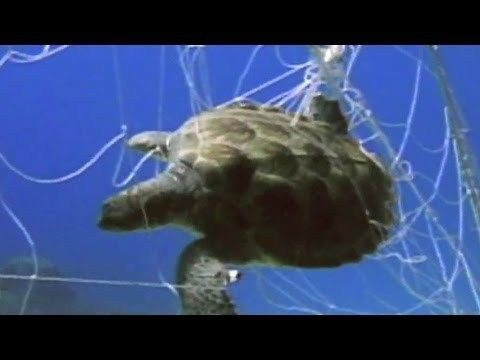 """(adsbygoogle = window.adsbygoogle    []).push();       (adsbygoogle = window.adsbygoogle    []).push();   In Baja, Mexico, Wallace """"J"""" Nichols has braved poachers and drug cartels to rescue sea turtles from the brink. Now, the men who once sent the turtles to... #Weather #videos"""