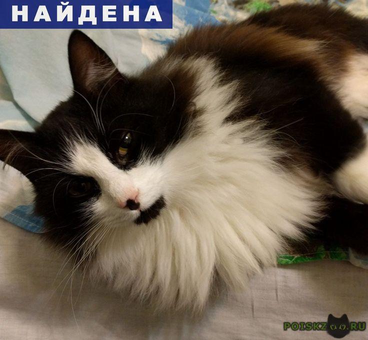Найдена кошка на рынке на км (возле орехово) г.Санкт-Петербург http://poiskzoo.ru/board/read29335.html  POISKZOO.RU/29335 В самом конце августа найден кот или кошка. Ласковый, ухоженный, черно-белого окраса с рыжим отливом.   РЕПОСТ! @POISKZOO2 #POISKZOO.RU #Найдена #кошка #Найдена_кошка #НайденаКошка #Санкт #Петербург #СанктПетербург #СПБ #Санкт_Петербург