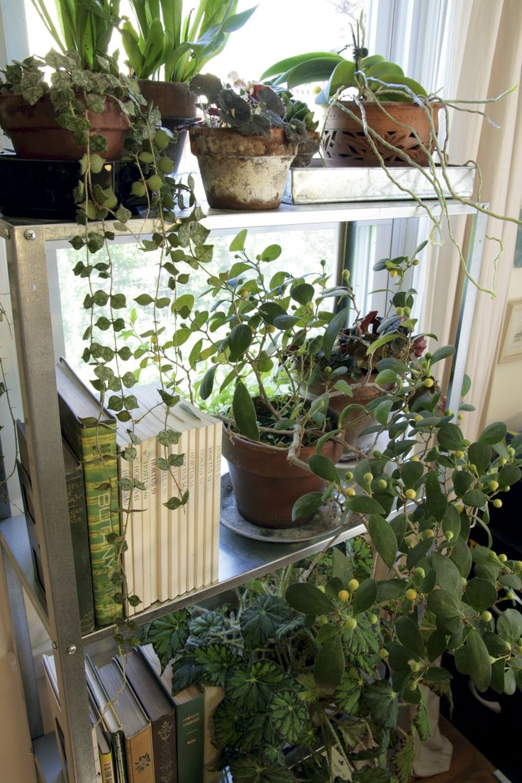 190 best gardening indoors images on pinterest houseplants