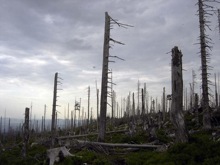 Karkonosze oferuja różne rodzaje krajobrazów.
