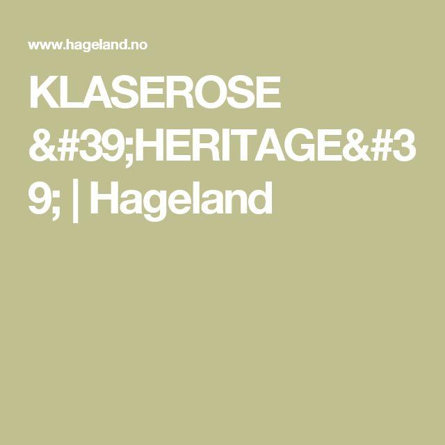 KLASEROSE 'HERITAGE' | Hageland