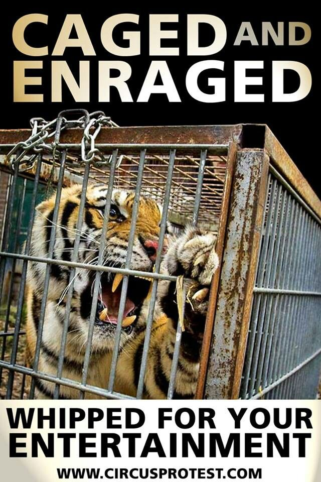 animal abuse in the circus The global animal foundation, 501(c)(3) functions like a green cross for animals and gets resources on the ground during disasters and emergencies that put animals, from pets to wildlife, in critical peril.