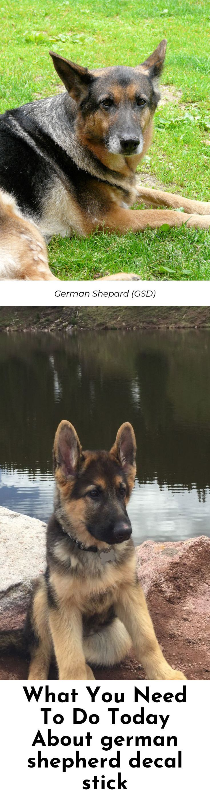Newborn German Shepherd Puppies For Sale Near Me Ideas