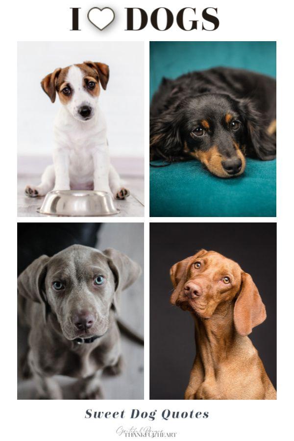 Miniature schnauzer, retriever, shepherd, poodle, beagle, dachshunds, terrier, or mutt, we love them all. Enjoy this a s…