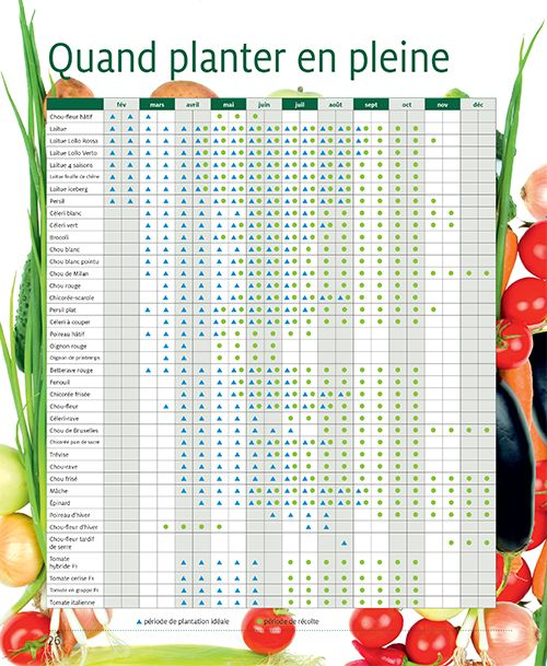 17 meilleures id es propos de calendrier des semis sur for Calendrier plantation jardin
