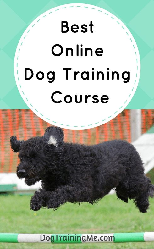 The best online dog training course is like having your own professional dog trainer on call to help you train your dog and fix any behavioral issues. The best dog training courses will include a large library of videos so you can see the training in action with real dogs. Click through for our pick now.