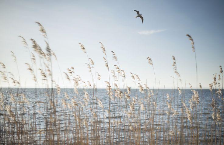 morze, Jurata, Jastarnia, Hel, Bałtyk, Gdynia, sea, krajobraz, nadmorski, landscape, bird, zdjęcia, obrazy, pictures, photos, photography, fine, art, prints