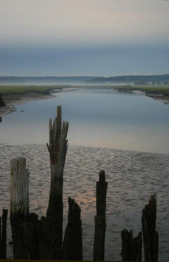 Foggy seaside marsh