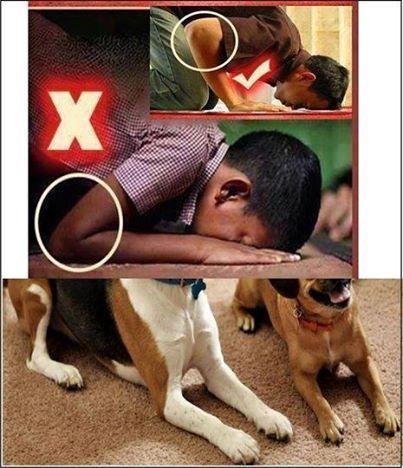 Sujud Anjing yang Allah SWT Murkai