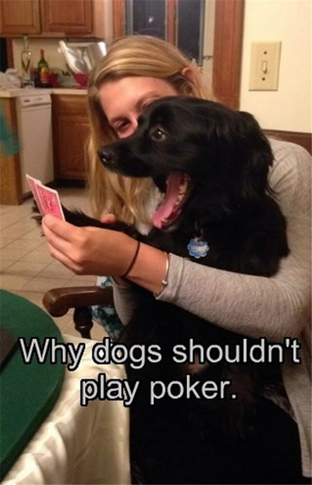 Worst poker face ever. #funny #dogs #cute