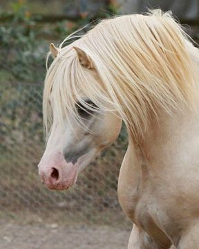 .Equine horse pony equestrian caballo pferde equestrian stallion gelding mare foal