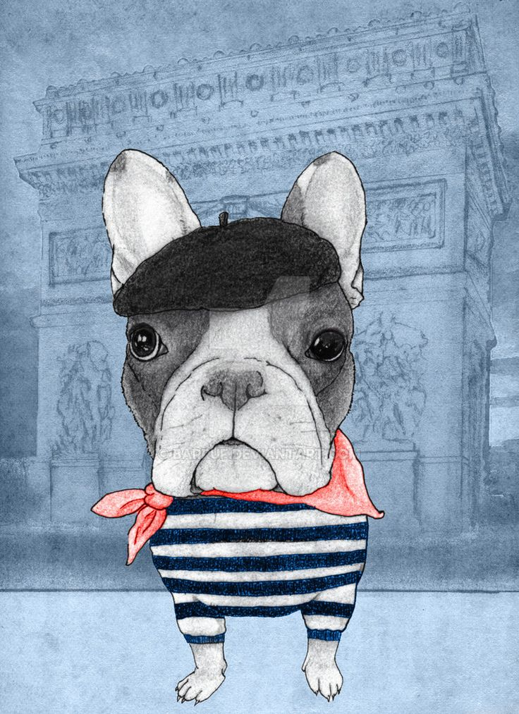 society6.com/Barruf/French-Bul… ----> buy french bulldog articles on society6!
