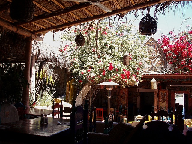 Mi Casa, Cabo San Lucas - ordered the chicken mole and tres leches cake. Best food I've ever had.