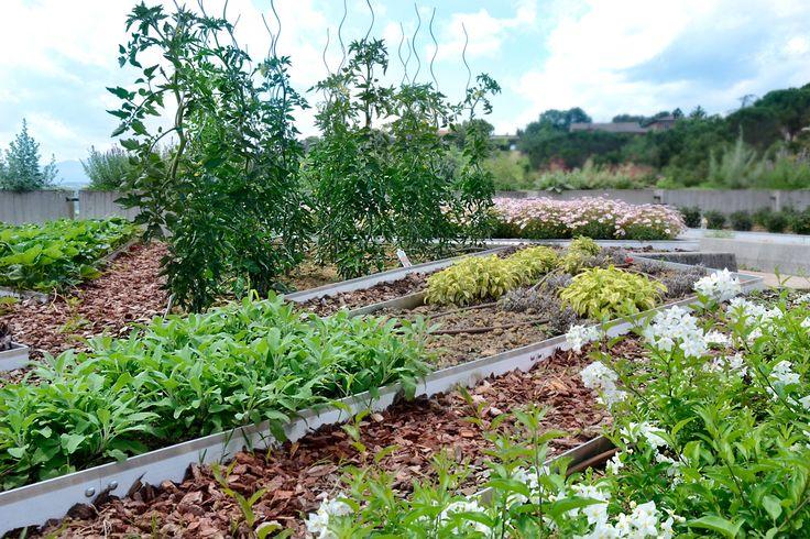 il nostro Orto - our vegetables garden
