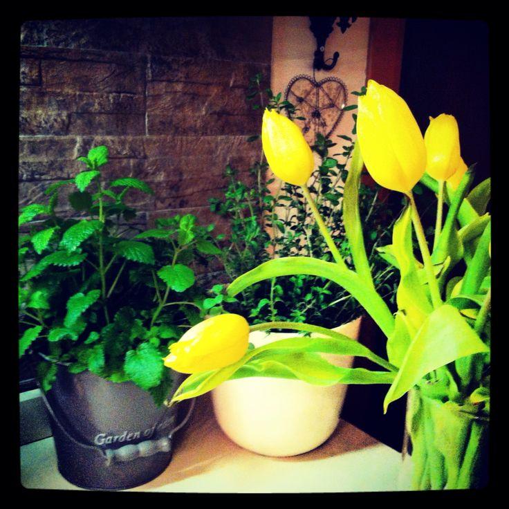 Erbe Aromatiche-Tulipani Gialli @myhome
