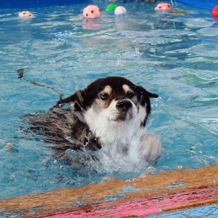 ペットスマイル投稿詳細 Petsmile ペット 動物 犬