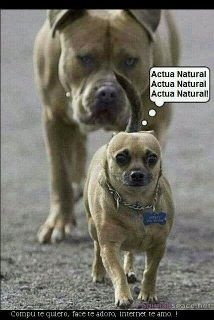 Dry Skin: Animals, Dogs, Funny Stuff, Funnies, Humor, Funny Animal, Natural