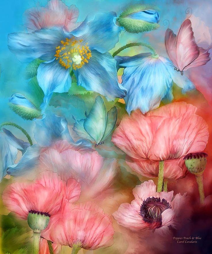 """""""Poppies Peach and Blue"""" by Carol Calavaris"""