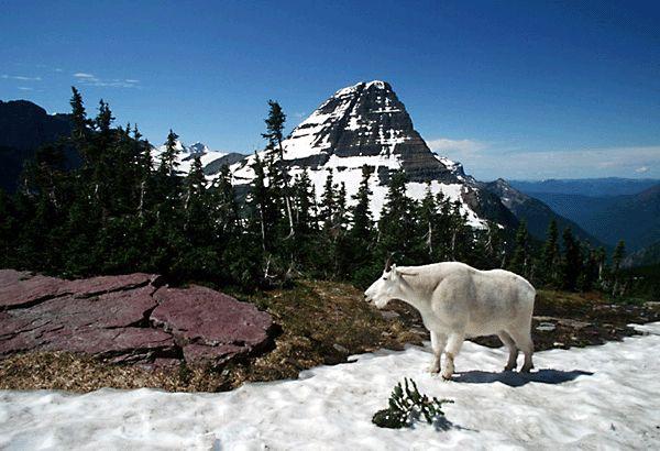 Glacier National Park Canadian Rockies Amp Glacier