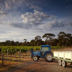 Bendigo winery