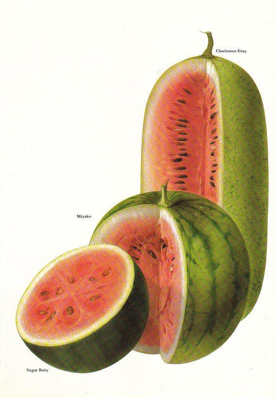Vintage 1960s Watermelon Color Illustration Book by niminsshop, $10.00