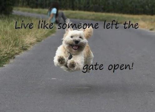 I love this saying!Animal Pics, Puree Joy, Puppies, Quotes, Living Life, Live Life, Happy Dogs, Gates Open, Good Advice