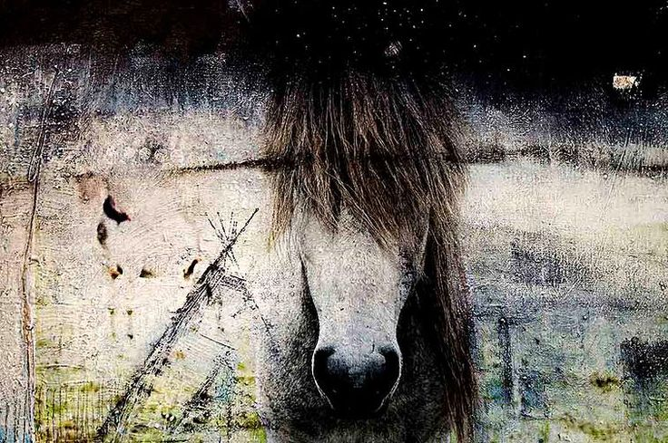 Blind Horse Staring by Nordic Art 365