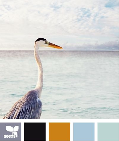 color vacation: Baby Rooms Colors, Colors Vacations, Colors Combos, Bathroom Colors, Design Seeds, Bedrooms Colors, Combinations Colors, Colors Palettes, Colors Schemes
