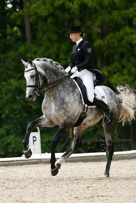 Half Arabian Dressage by lingen37 on DeviantArt