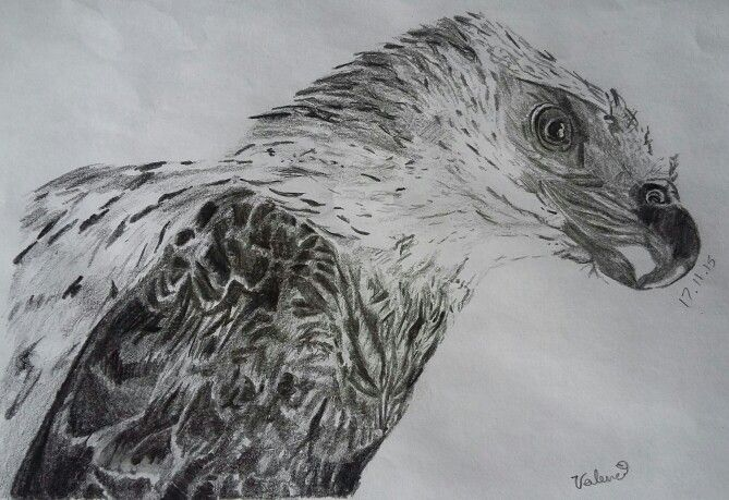 #Drawing of #eagle