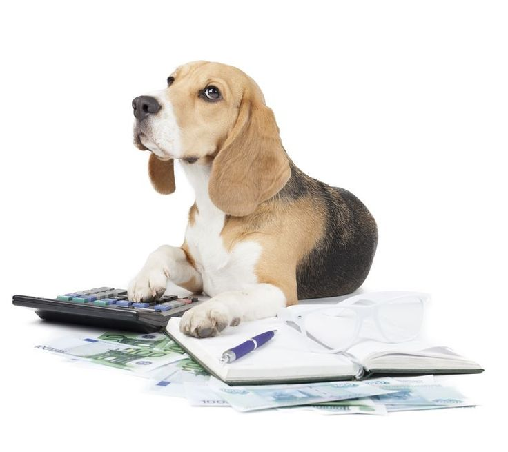 Change your Thinking about Pet Insurance