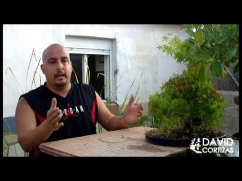 Escuela de Bonsai Online - Riego - YouTube