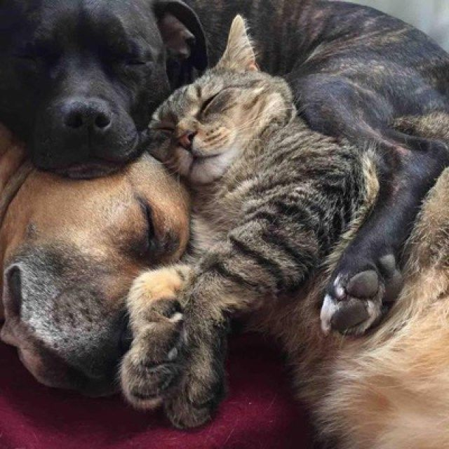 He just uses kitty as a snuggle pillow. No respeks!