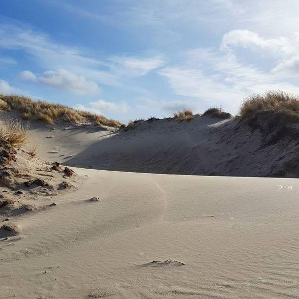 ⛱ . . . #dunes #igdaily #photooftheday #photography #wanderlust #naturelovers #naturegram #mobile_photography3 #greennature #beautiful #beachlife #walk#instanetherlands #igersholland #instadaily #skylovers #dutch_connextion #ig_holland #natuurfotografie#travelstagram #madeinholland