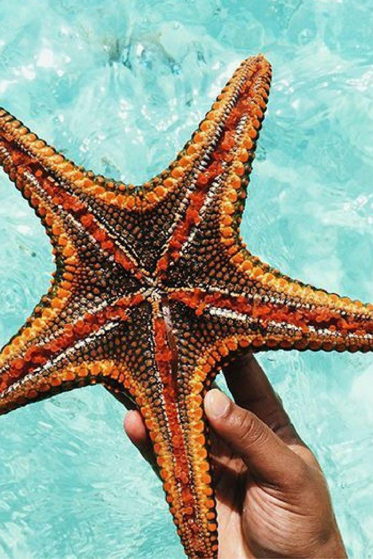Wauuw, wauw en nog eens wauw. Zanzibar, wat ben je prachtig! Hier kan je je wel 9 dagen vermaken! 🌴 https://ticketspy.nl/deals/heerlijk-9-dagen-zanzibar-met-hotel-direct-aan-zee-en-ontbijt-vluchten-va-e479/