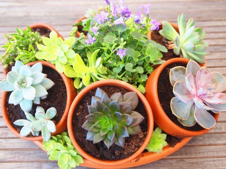 Composition De Succulentes Et Plantes Grasses Plantes Grasses