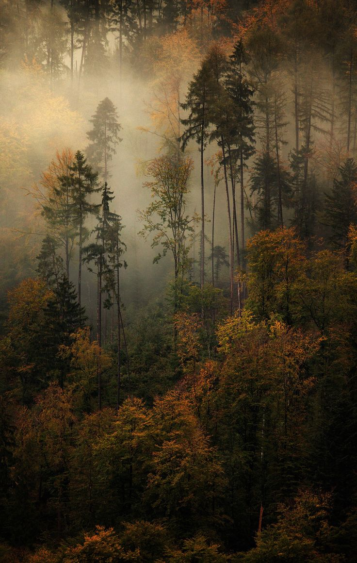 Ghostly Memories - Evolving mist through autumn forest , revealing the special thin trunk of these trees . Captured in switzerland around Grindelwald.  © Alexandre Deschaumes 2011