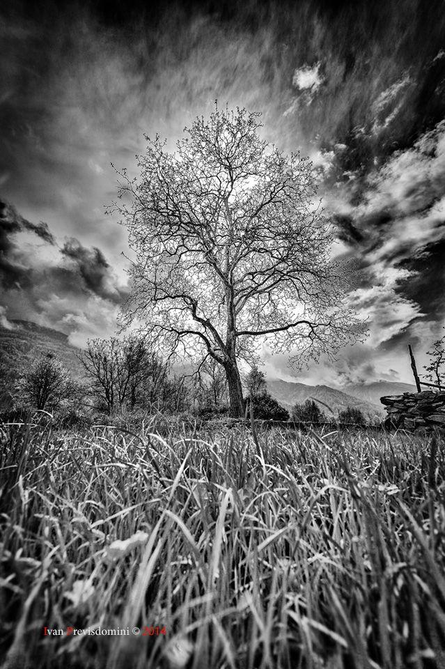 Amo pensare in Bianco e Nero :-)  Ivan Previsdomni © 2014