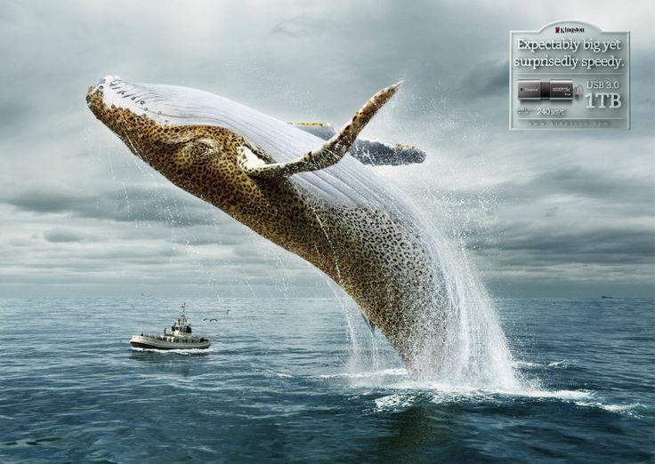 Kingston USB 3.0 1TB: Whale-Leopard - Gute Werbung
